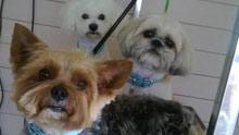 Three Muskateer Dogs at SmugPup Welwyn Garden City